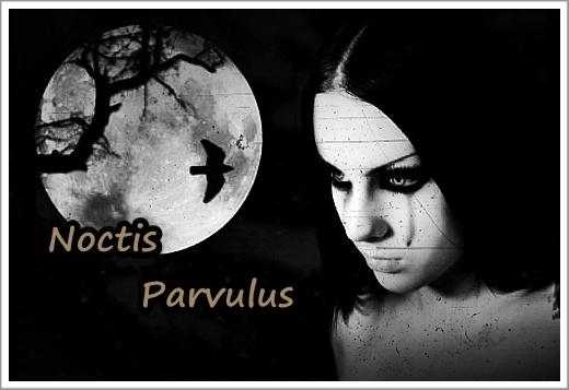 Noctis Parvulus Fox1mw1uwdin8gxebfb