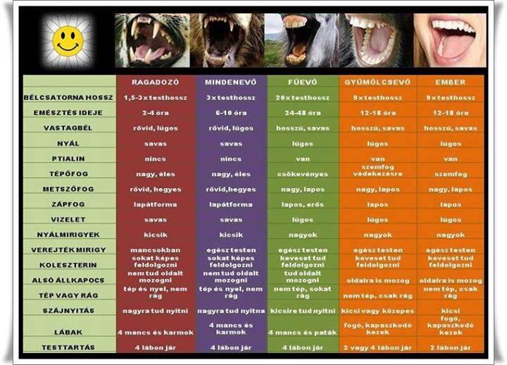 Vegetarianizmus és Veganizmus 11011521_817212261705157_4400413926408250463_n