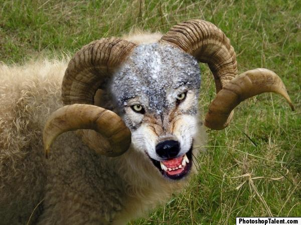 Orman Silvermist BellatriX Sheep-wolf