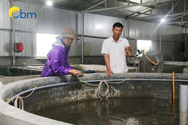 Đi tìm địa chỉ cung cấp cá lăng giống uy tín, chất lượng tại miền Bắc Dia-chi-mua-giong-ca-lang-uy-tin-chat-luong-tai-mien-bac15