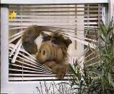 Альф/Alf ..... Alf