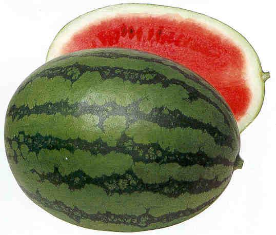 سئل طباخ عن النساء D7302watermelon