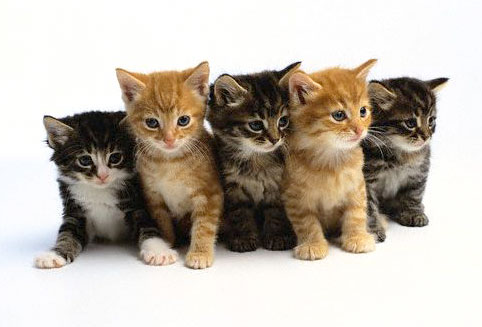 Vaccine For Cat Allergies Developed By Swiss Scientists Kittens4blog1