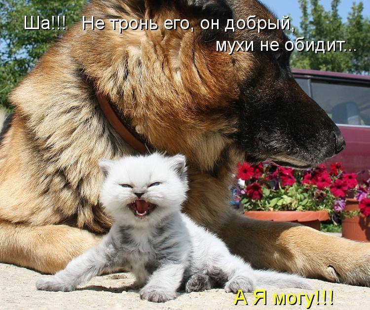 Друзья все понимают - Страница 3 1343230745_1343049282_kotomatritsa_-e