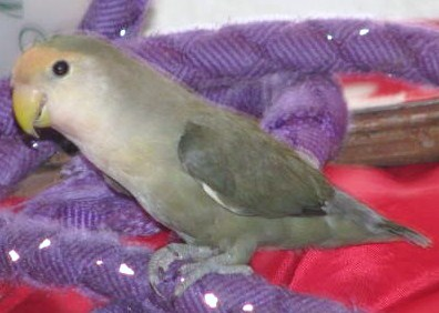 Moje ptice 3027731_orig