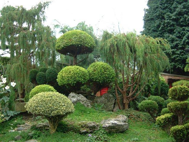Gardens of Japan DSCF1902