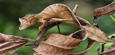 تكيف الكائنات الحية مع البيئة Hawanat-o-nabatat-407-1465137913