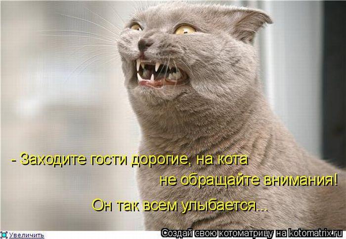 Котоматрица 1296801563_kotomatrix_47