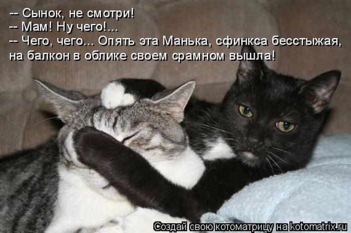 Кошачий юмор - Страница 8 1308900900_kotomatrix_09