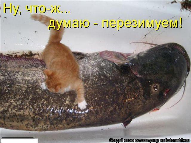 Котоматрица 1316522748_kotomatrix_0644