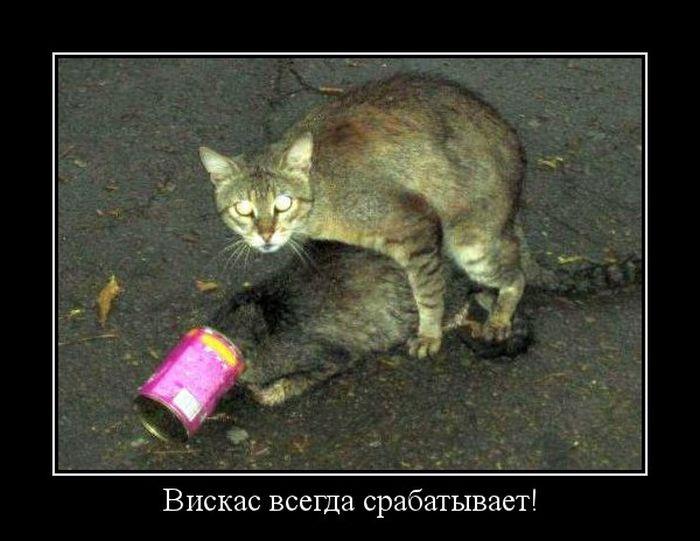 Позитив ))))Демотиваторы, анекдоты и прочее))) - Страница 2 1320389687_dmoetivatory_14