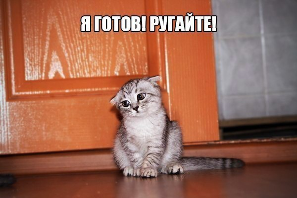 Сама по себе гулёна (о кошках) - Страница 3 Prikolnye_foto_s_koshkami_04