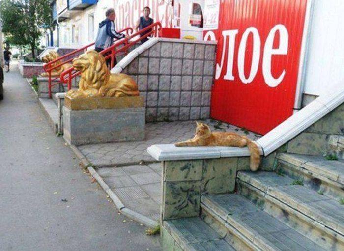 Сама по себе гулёна (о кошках) - Страница 3 Prikolnye_foto_s_koshkami_17