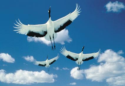 Sve vrste Ptica - Page 3 Ptice