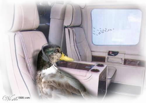 Humore montazhi dhe foto tjera humoristike - Faqe 2 Worth1000_5