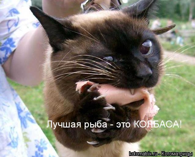 Котоматриця!)))) F