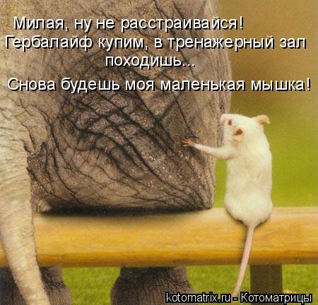 Котоматриця!)))) - Страница 10 Zm