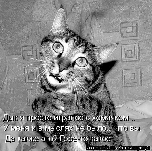 Котоматриця!)))) RA