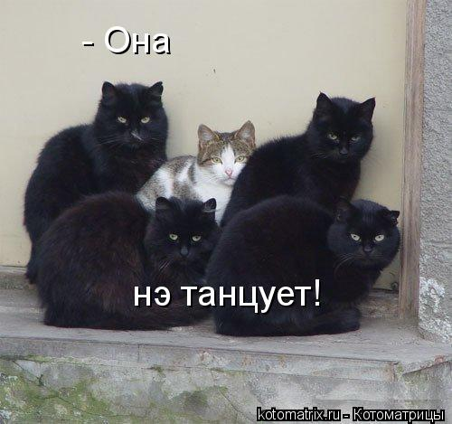 Котоматриця!)))) News.txtd