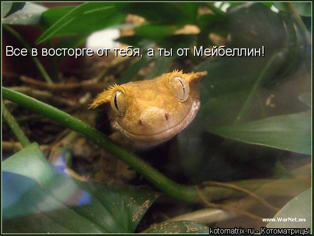 Котоматриця!)))) - Страница 6 Zw