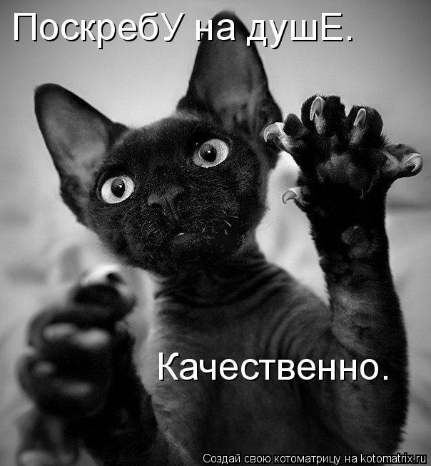 Котоматриця!)))) 352710
