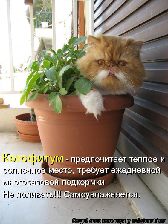 коты и цветы - Страница 2 357968
