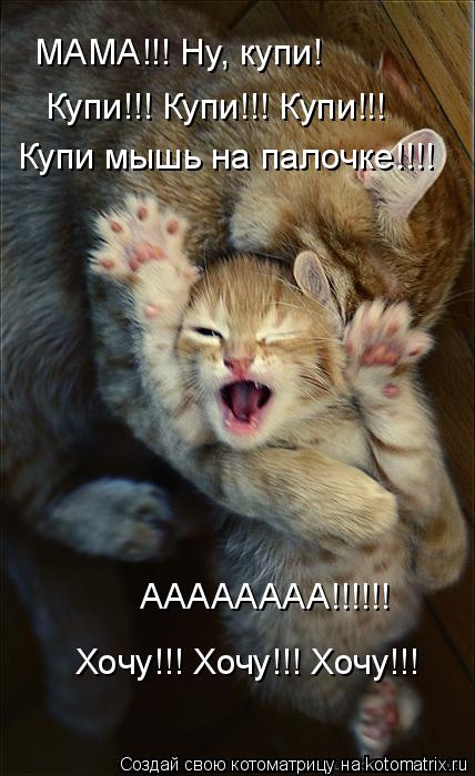 Котоматриця!)))) - Страница 10 377963