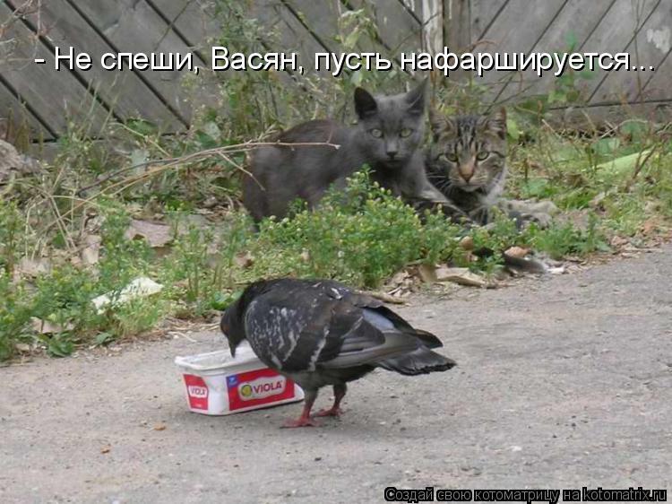Котоматрица: - Не спеши, Васян, пусть нафаршируется...
