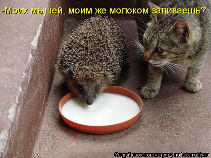 Котоматрица: -Моих мышей, моим же молоком запиваешь?
