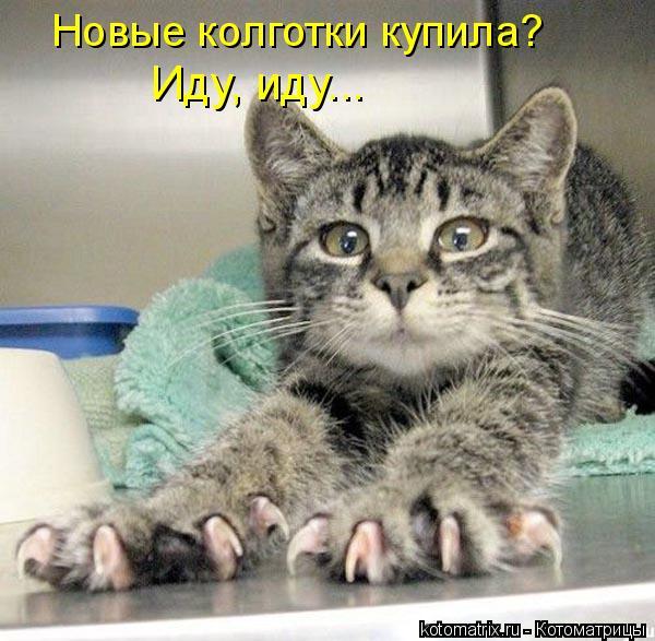 Котоматриця!)))) 461232