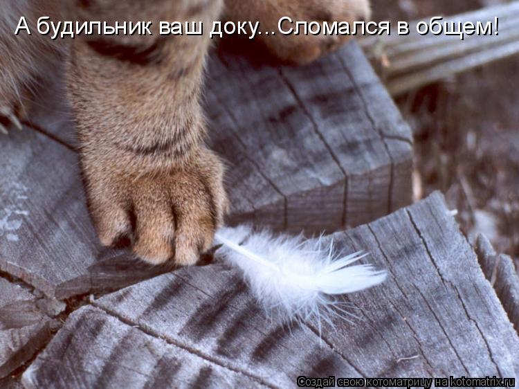 Котоматриця!)))) - Страница 6 513590
