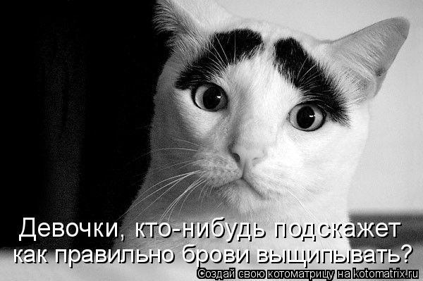Котоматриця!)))) 638610