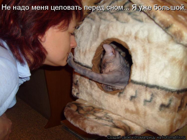 Котоматриця!)))) 644519
