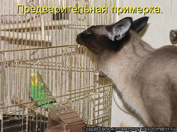 Котоматриця!)))) - Страница 6 669220