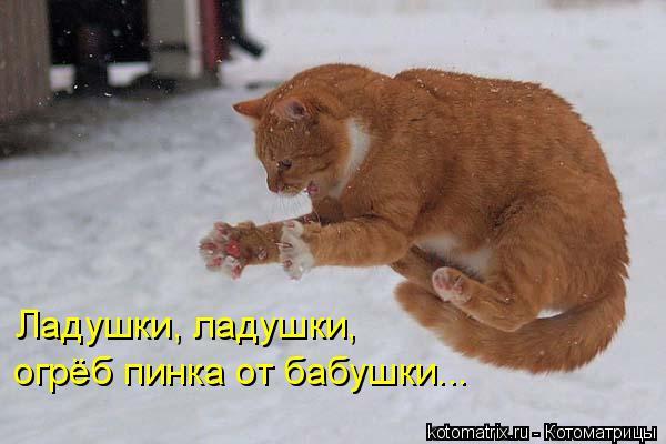 Котоматриця!)))) 678331