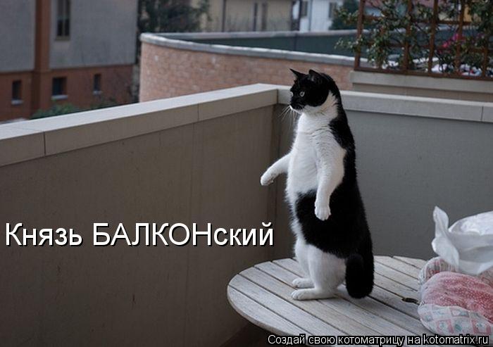 Котоматриця!)))) 682774