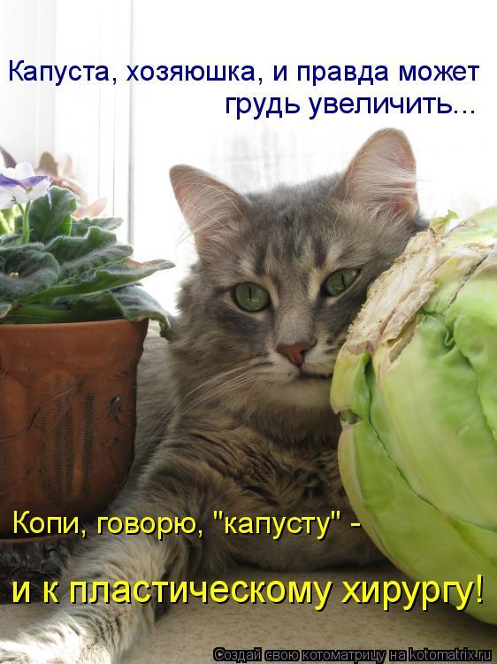 Котоматриця!)))) - Страница 6 731209