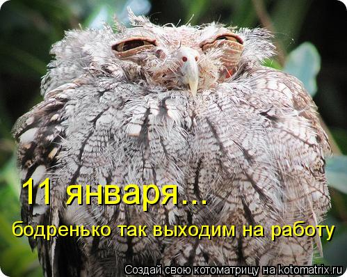 Котоматриця!)))) - Страница 9 776542