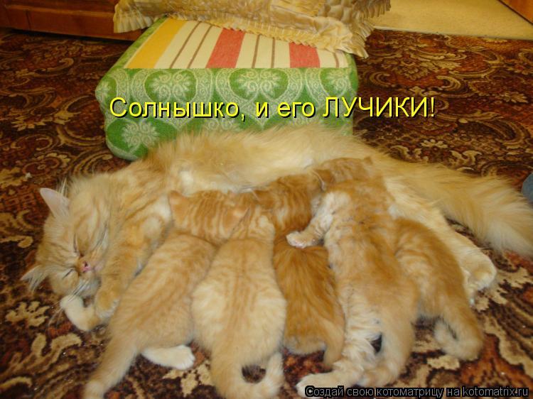 Котоматриця!)))) 782567
