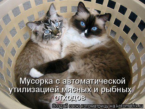 Котоматриця!)))) 811263