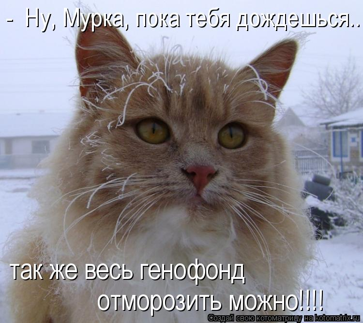 Котоматриця!)))) - Страница 6 811939