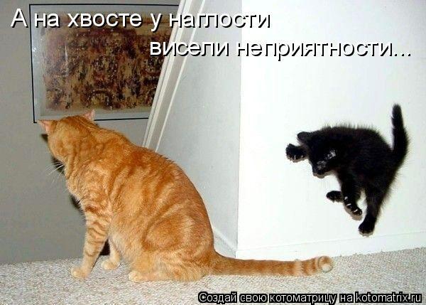Котоматриця!)))) 832279