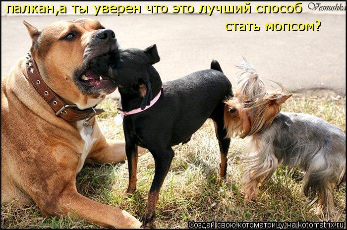 Котоматриця!)))) 858581