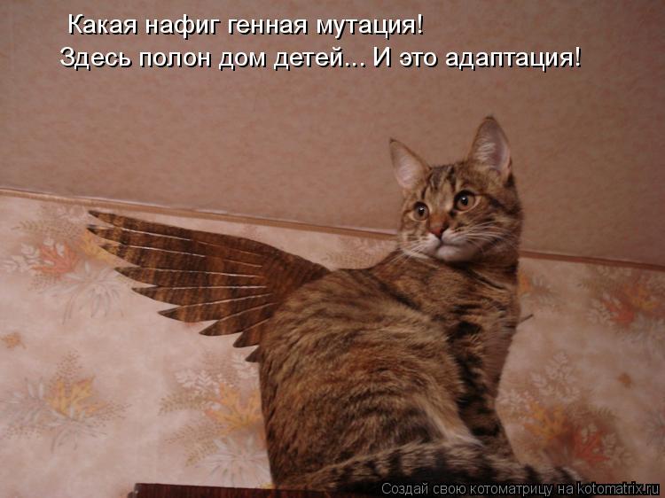 Котоматриця!)))) 858746