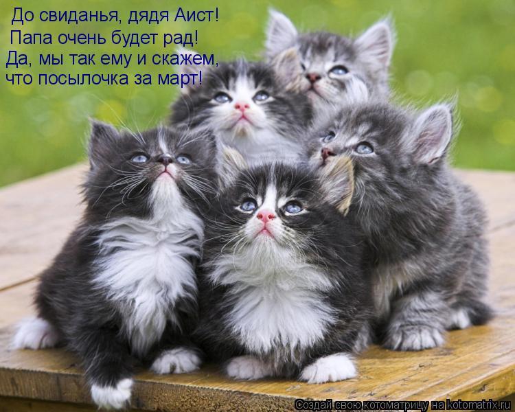 Котоматриця!)))) 858865