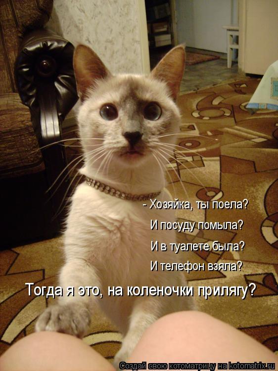 Котоматриця!)))) 859133