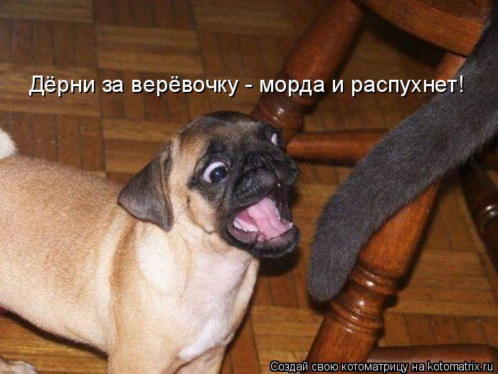 Котоматриця!)))) 861401