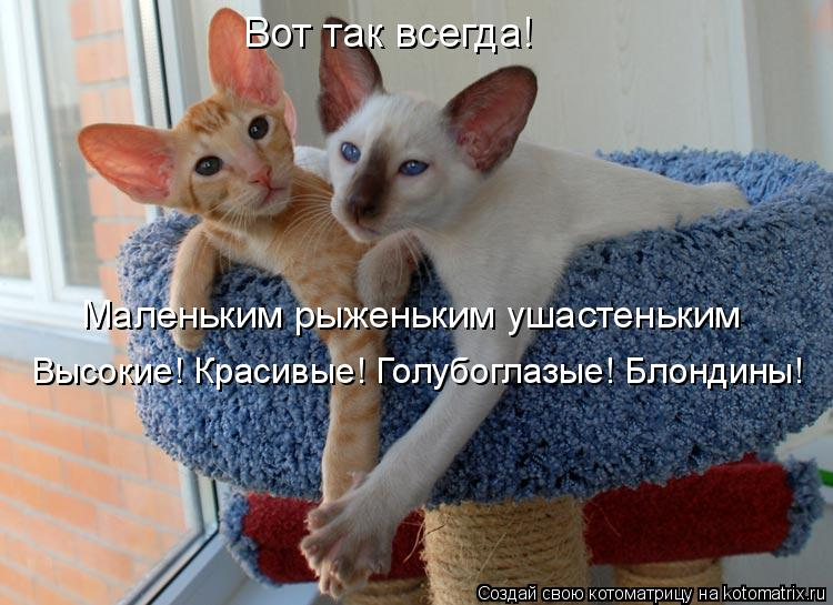 Котоматриця!)))) 861527