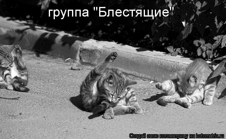 Котоматриця!)))) 861630