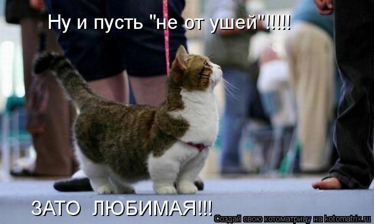 Котоматриця!)))) 862443